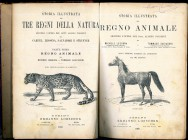 STORIA ILLUSTRATA DEL REGNO ANIMALE